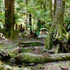 Tasmanian Road Trip Part 1: Trowutta Arch