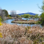 A Wetland in the Nation's Capital